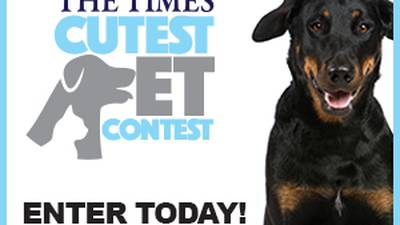 Your pet could be named August's Cutest Pet! Submit your photo today!
