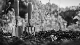Simple ways to reduce risk of disease in your garden
