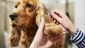 Readers' Choice winner: The top 7 best pet groomers in Kane County