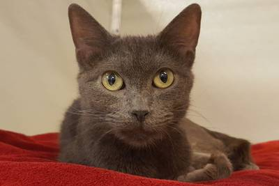 Loving cat hopes forever home is meant to be