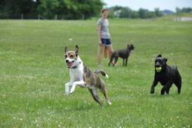 St. Charles Park District: Make a playdate for you and your dog