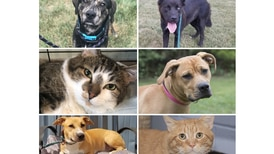 Pets of the Week: Sept. 13