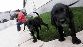 Highly contagious canine parvovirus outbreak now in Sycamore, still in DeKalb, health officials warn
