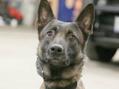 Peru police ask for public's vote for a possible K-9 grant