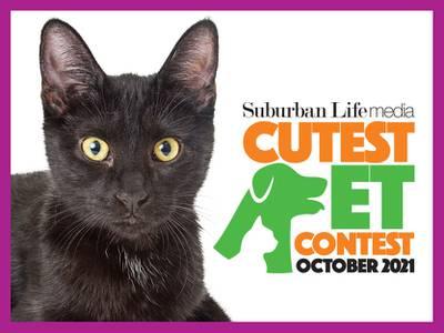 Enter the October Cutest Pet Contest