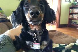 Nelson, the dachshund, welcomed home after island adventure in Ottawa