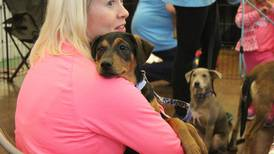 Catch the Chicago Pet Show and bring home a new friend