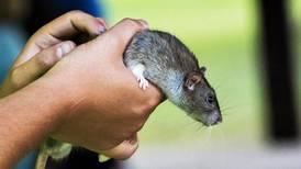 Berwyn residents demand rat abatement at town hall