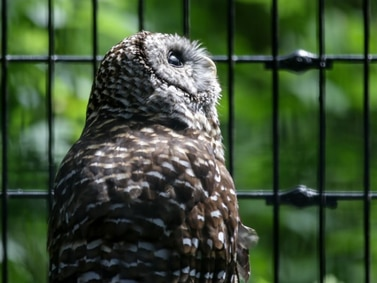 Proposed overhaul of Willowbrook Wildlife Center takes next step forward