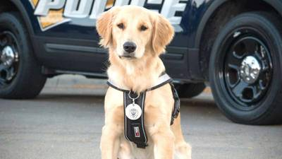Vote for Brinkley! Sterling police comfort dog competing for grant money