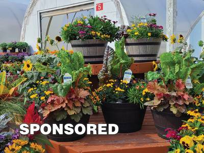 Update your planters with fall annuals