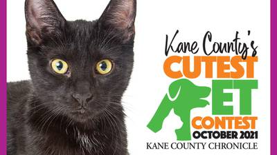 It's time to vote for October's cutest critter