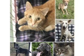 Pets of the Week: Oct. 25