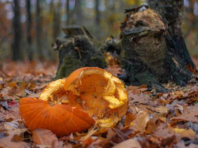 Don't dump your pumpkins, Will County Forest Preserve says