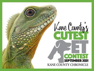 Enter your pet in the September Pet Contest
