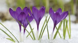 Early-blooming spring flowers