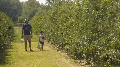 Photos: Kuipers open for apple picking in Maple Park
