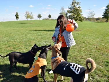 Photos: DeKalb Park District's Howl-O-Ween! dog costume contest