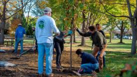 Woodridge tornado reforestation efforts to include Morton Arboretum tree donations