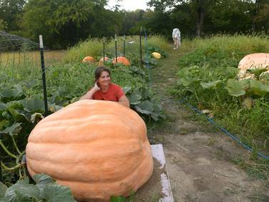 Giant pumpkins to make an appearance at Autumn on Parade