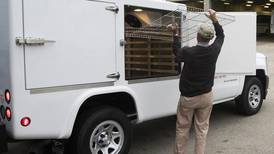 Bill sponsored by Crystal Lake Democrat requires Meals on Wheels recipients be given fact sheets