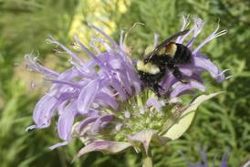 Landowners needed for 'prairie island habitats'