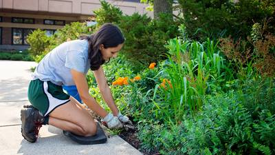 Downers Grove Park District intern creates monarch butterfly waystation